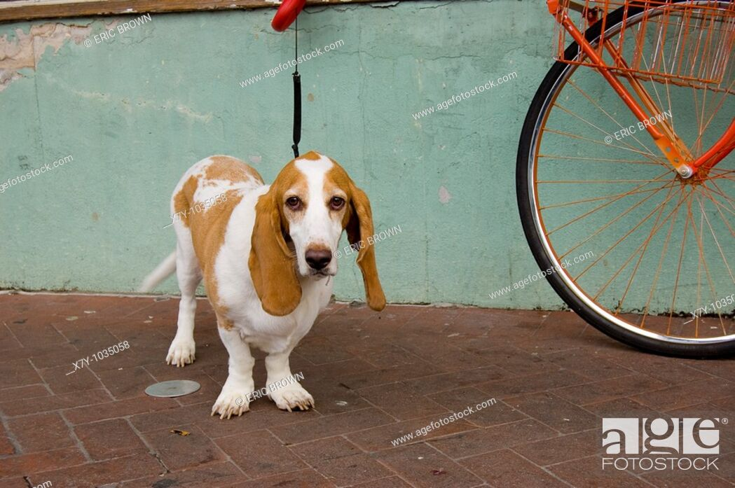 Stock Photo: A leashed dog waits near a bicycle.