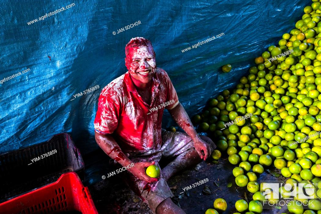 Stock Photo: An Afro-Colombian worker, covered by thrown flour due to his birthday, loads green oranges (for juicing) into baskets inside a truck parked in a fruit market in.