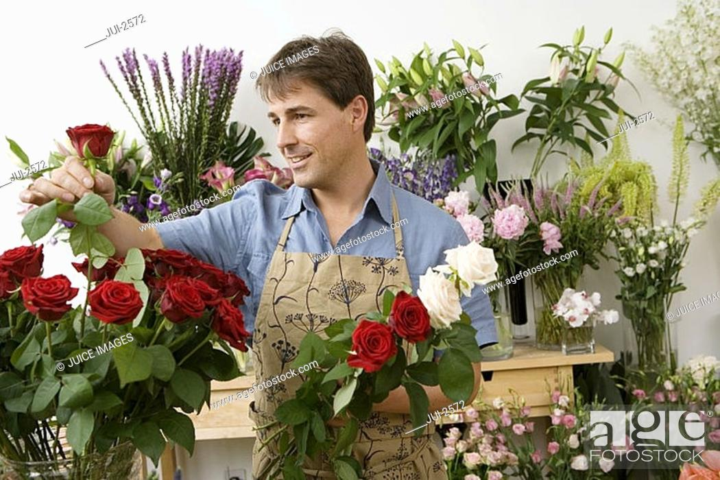 Stock Photo: Male florist working in flower shop, checking red rose, smiling.