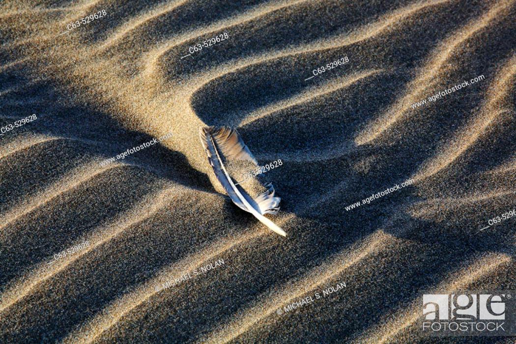 Stock Photo: Patterns in the sand dunes surrounding a feather on Isla Magdalena on the Pacific side of the Baja Peninsula, Mexico.