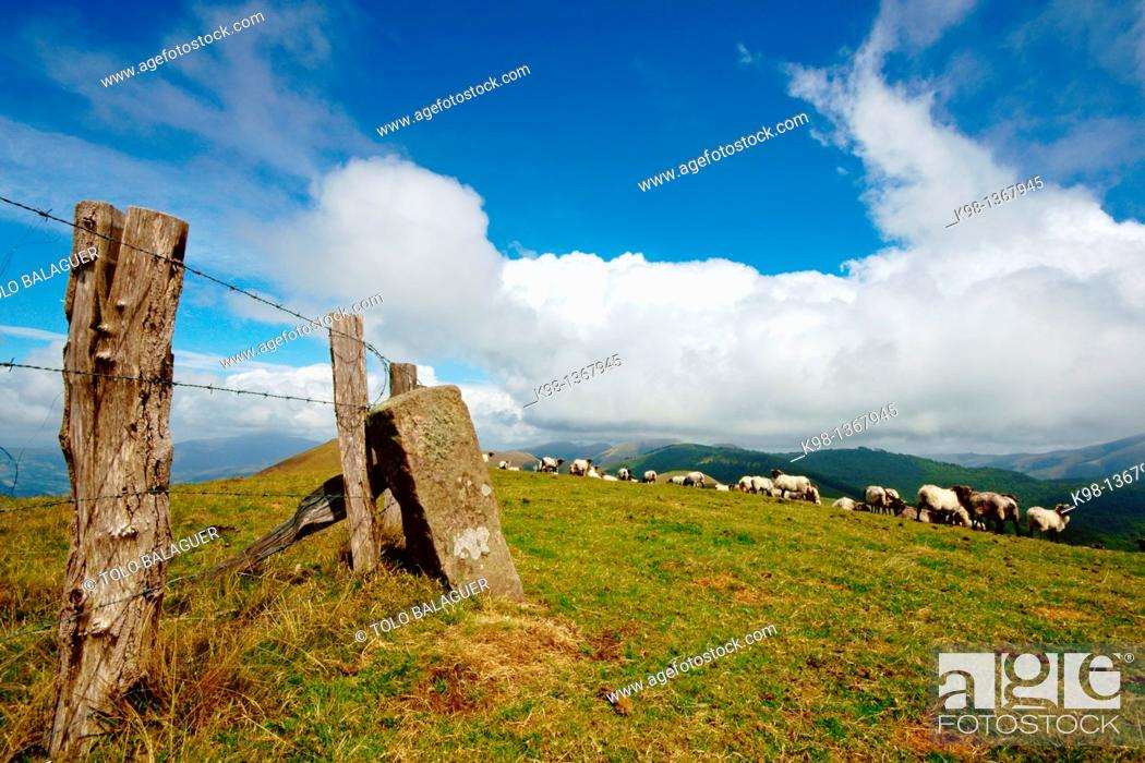 Stock Photo: Lachen flock of sheep on the hill of Arbilleta Great Pyrenees trip 11 Navarra Spain.