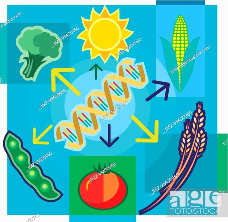 Stock Photo: Montage illustration about genetically modified food containing DNA, sun, vegetables and wheat.