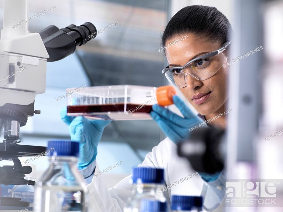 Stock Photo: Biomedical Research, female scientist viewing stem cells developing in a culture jar during an experiment in the laboratory.