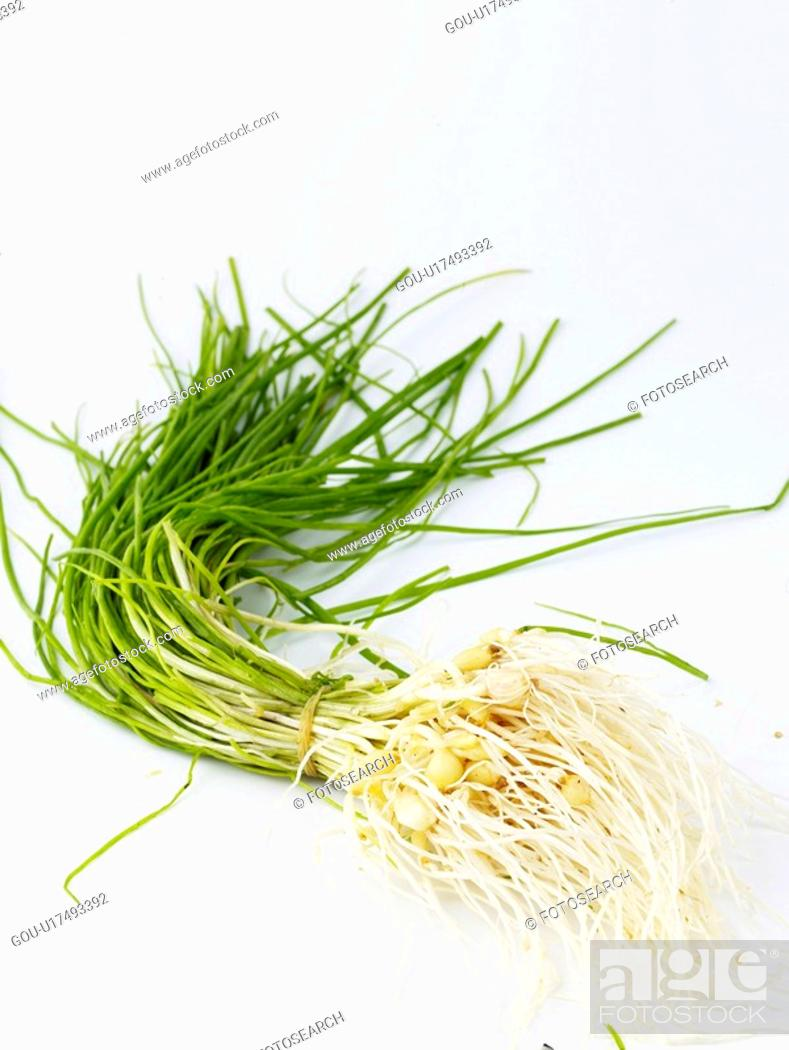 Stock Photo: ingredient, wild chive, food material, cuisine, food, wild garlic.