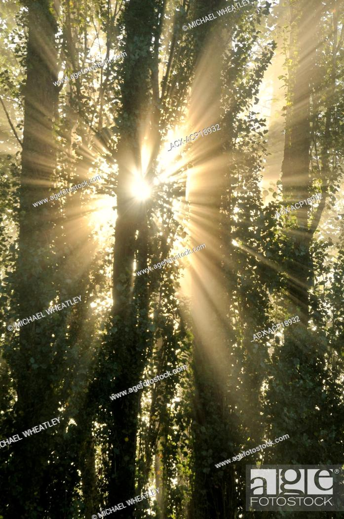 Stock Photo: Sunrise god-beams through fog and trees, Burnaby Lake Regional Park, Burnaby, British Columbia, Canada.