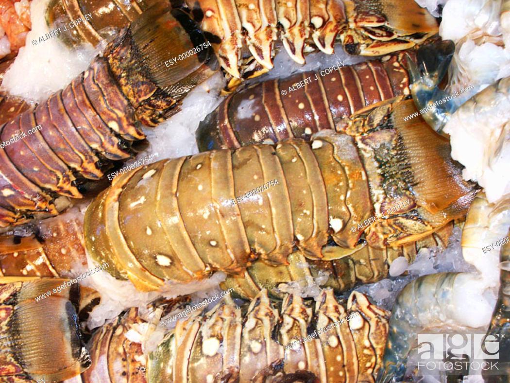 Stock Photo: Rock lobster.
