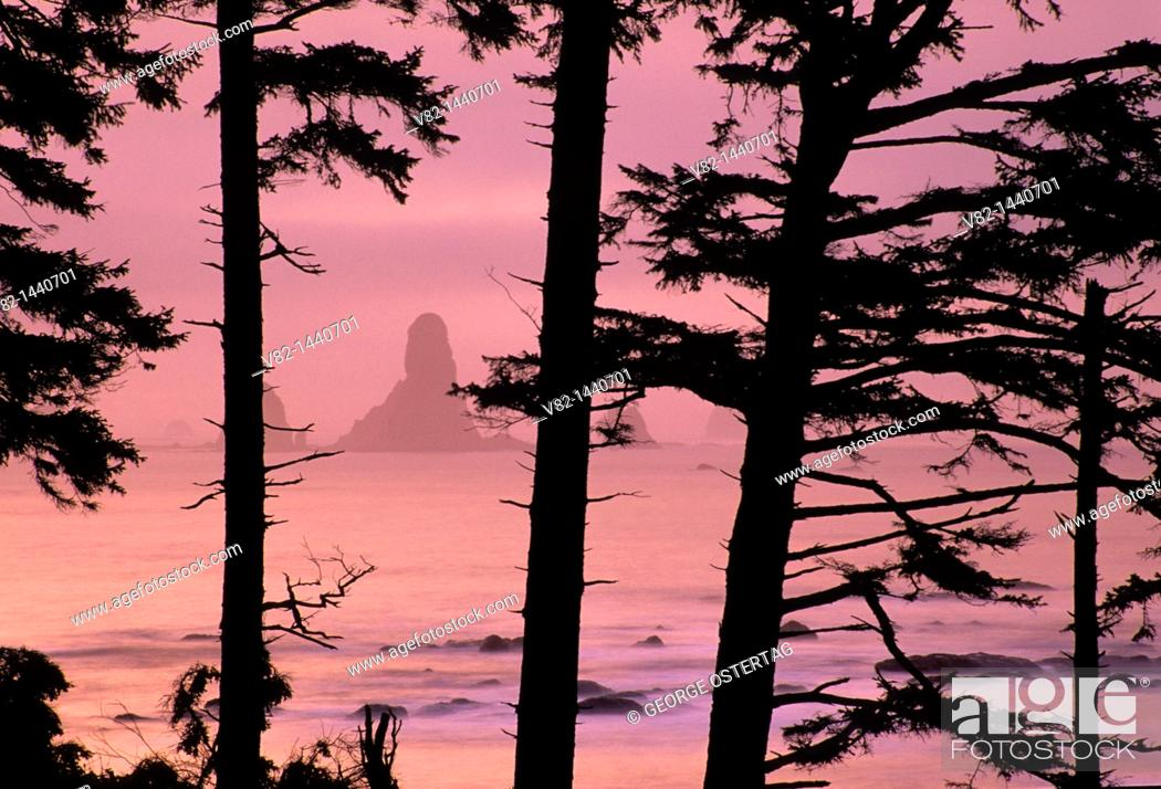 Stock Photo: Dawn at Third Beach, Olympic National Park, WA.