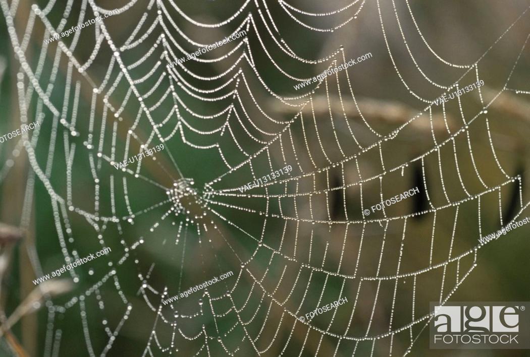 Stock Photo: Spider Web.