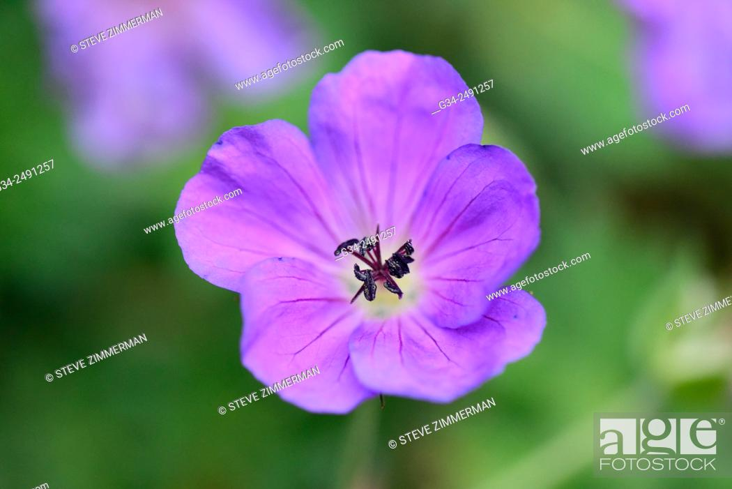Stock Photo: Purple Flower Power.