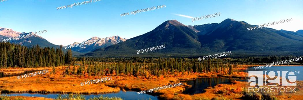 Stock Photo: river, swamp, forest, sky, tree, panorama.