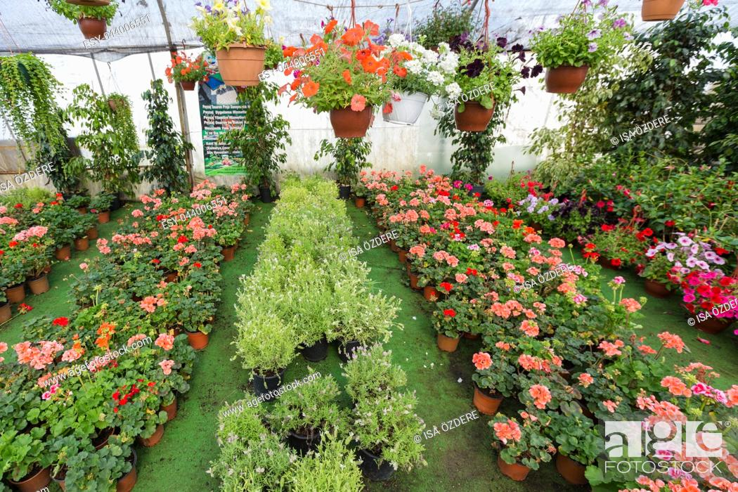 Imagen: Different kind of flowers and plants in pots,plastic bags or chests at a botanical garden in greenhouse.