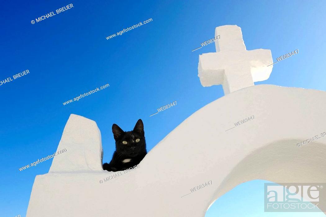 Stock Photo: Black cat and white cross, Oia, Santorini, Cyclades islands, Greece.