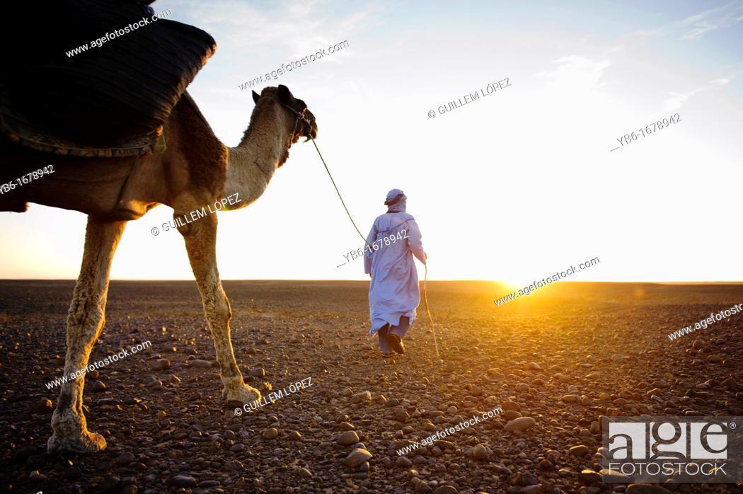 Stock Photo: Nomad Berber with his dromedary in the Sahara desert, Morocco.