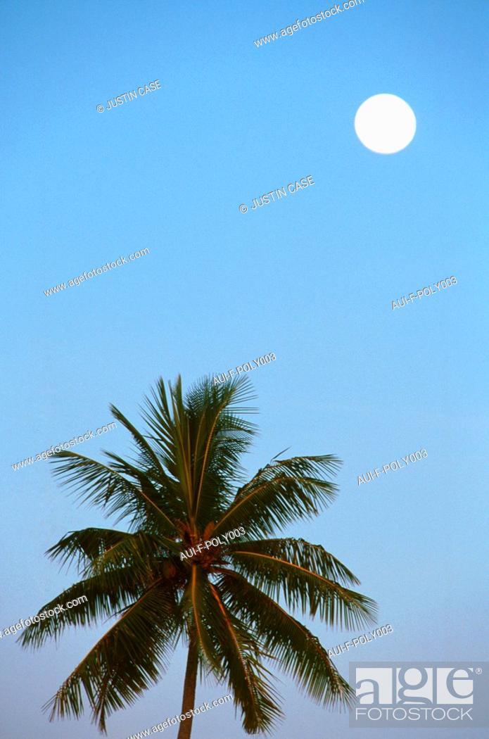 Stock Photo: French Polynesia - Robert Wan.