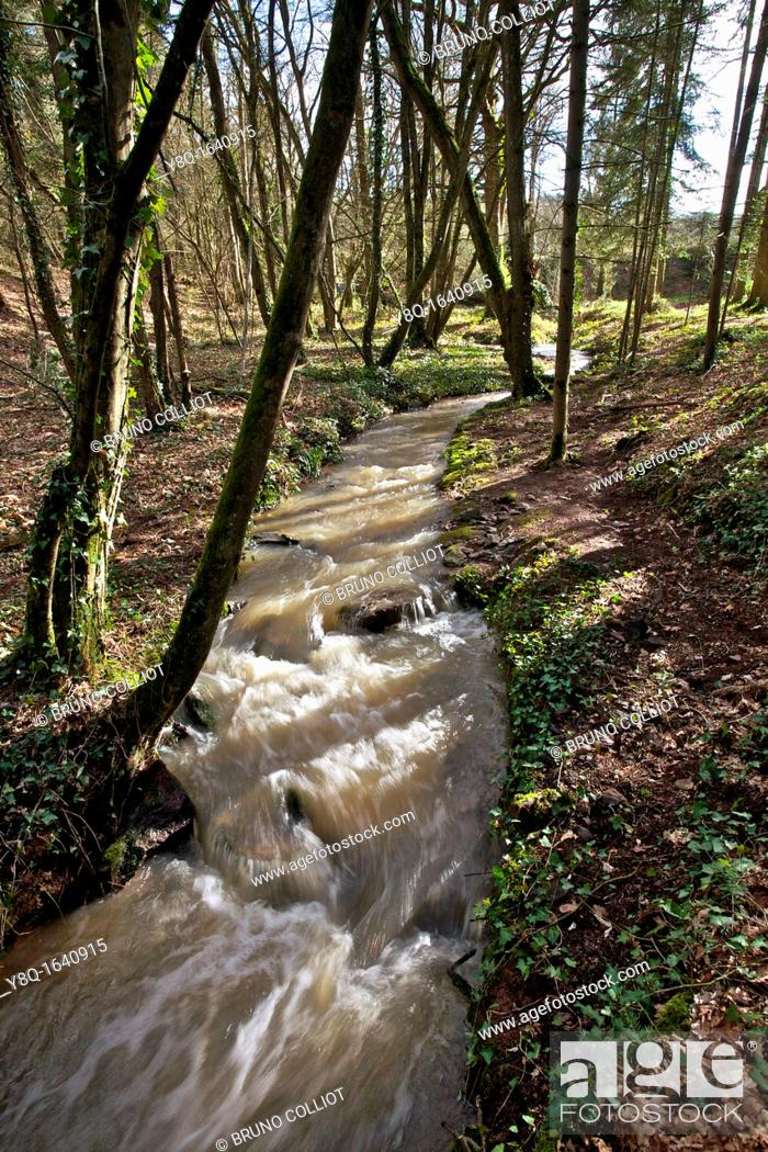 Stock Photo: passage of the torrent instead said, mill case, broceliande, Ille et Vilaine, Brittany, France.