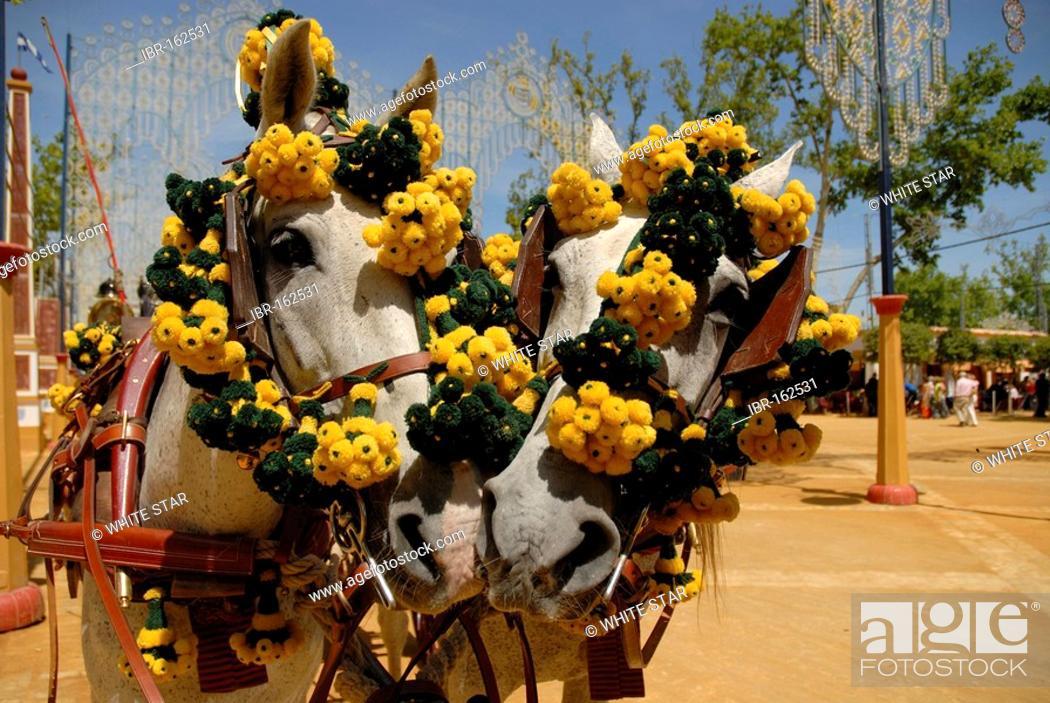Stock Photo: Decorated horses , Feria de Caballo , Jerez de la Frontera , Cadiz , Andalusia , Spain , Europe.