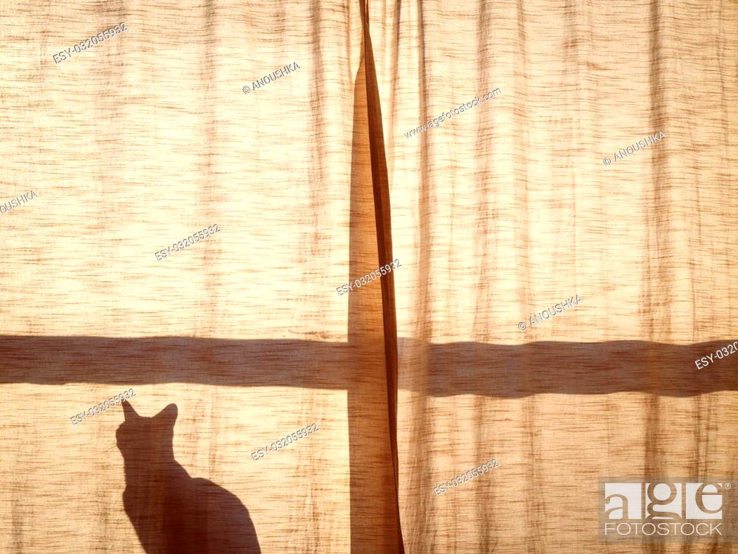 Stock Photo: Silhouette shadow of a small cute cat sitting alone on the window sill behind the curtain in sunlight on sunset, copy space for text.