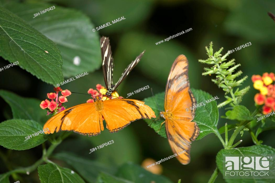 Stock Photo: New York City, Bronx Zoo, Butterfly.