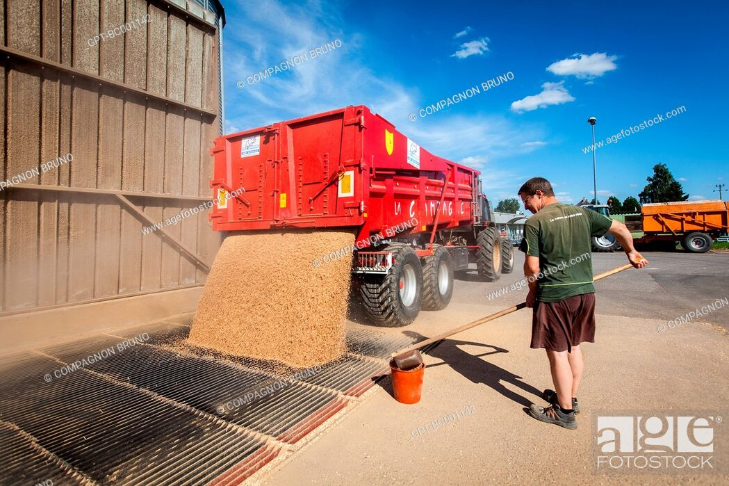 Stock Photo: TAKING A SAMPLE, DELIVERY OF THE WHEAT HARVEST AT THE SILO OF THE GRAIN COOPERATIVE OF ESSAY, ORNE (61), FRANCE.