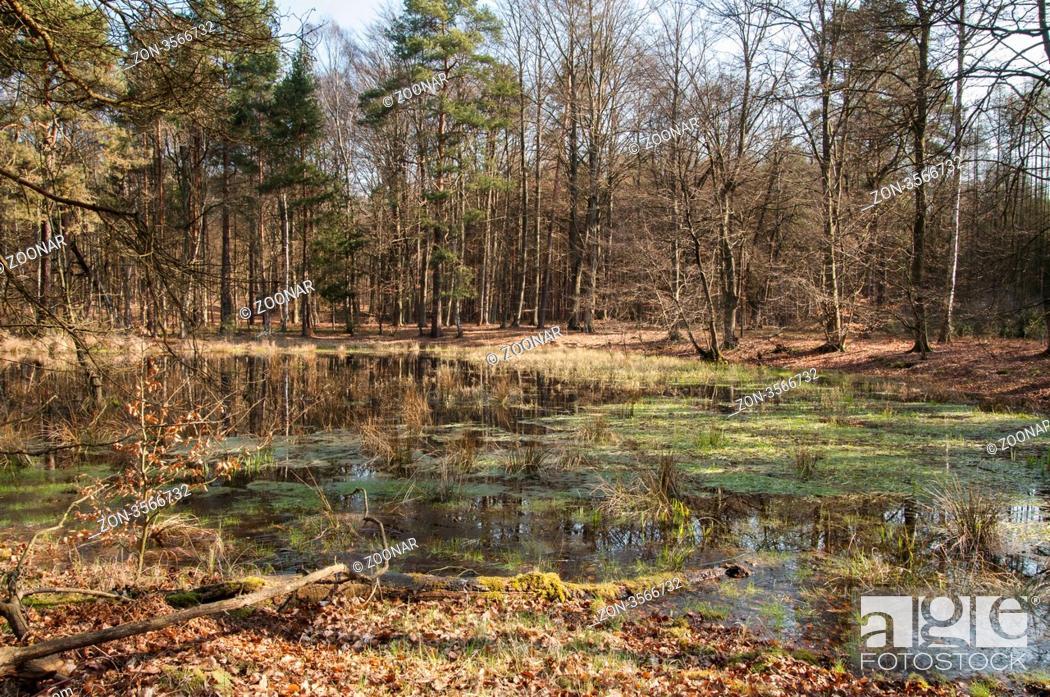 5269d65557 Stock Photo - Kleiner See in einem Berlin Wald