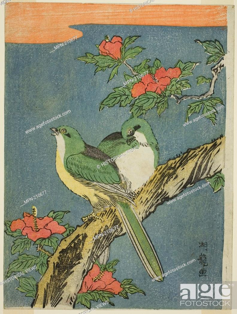 Two Birds On Hibiscus Tree C 1770 Isoda Koryusai Japanese 1735