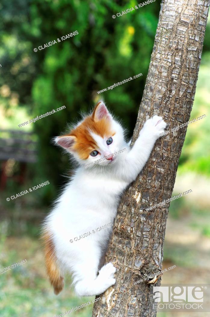 Photo de stock: Kitten climbing on a tree.