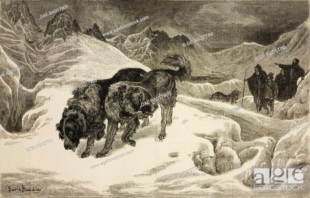 St Bernards In The Snow On A Mission Of Mercy From A Watercolour