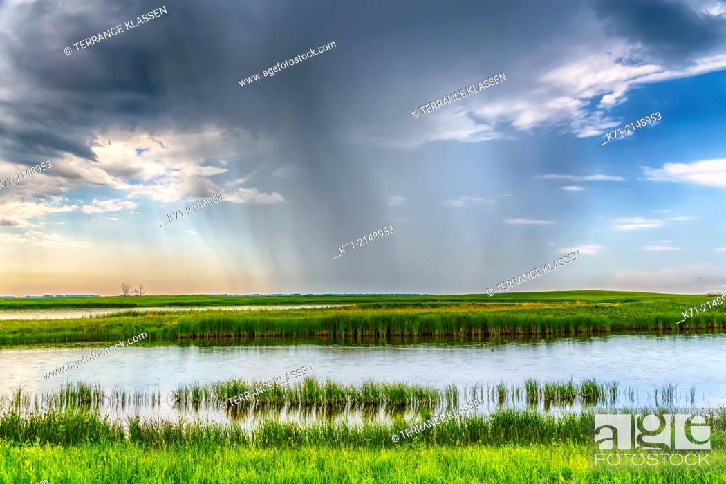 Stock Photo: A rain shower on the prairie landscape near Langdon, North Dakota, USA.