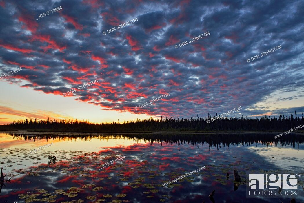 Stock Photo: Dawn skies reflected in a beaver pond, Wood Buffalo National Park, Alberta, Canada.