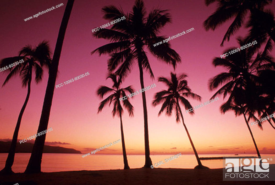 Stock Photo: Palm trees silhouetted by bright pink sunset sky.