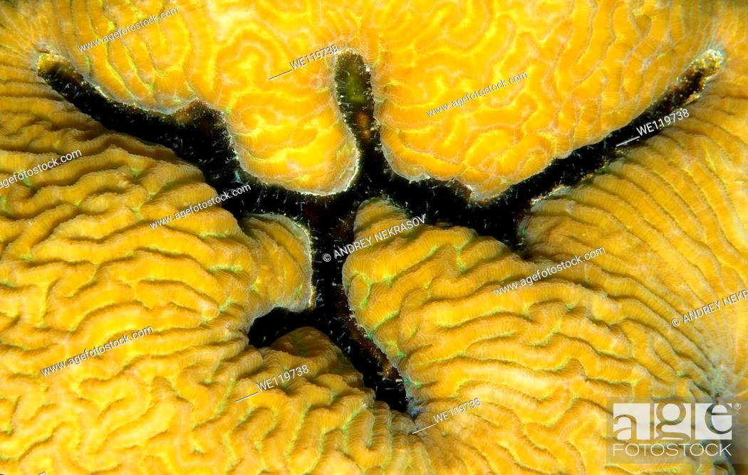 Stock Photo: Coral, close-up, Red Sea, Egypt, Africa.