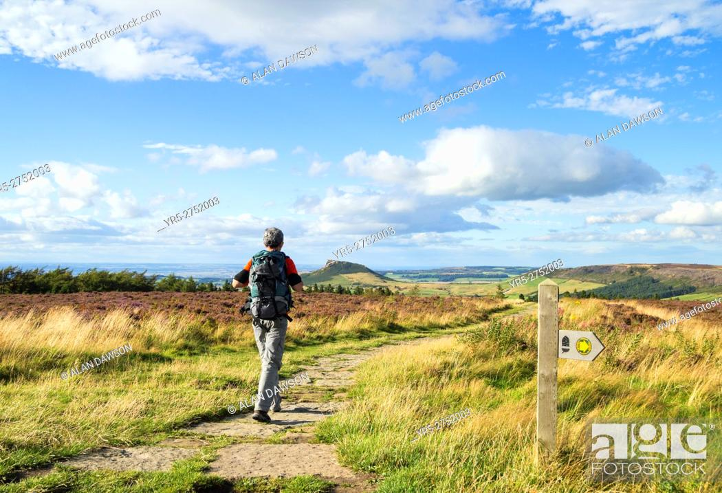 Stock Photo: Mature male hiker on The Cleveland Way national trail near Captain Cook`s monument on Easby Moor, with Roseberry Topping in the distance.