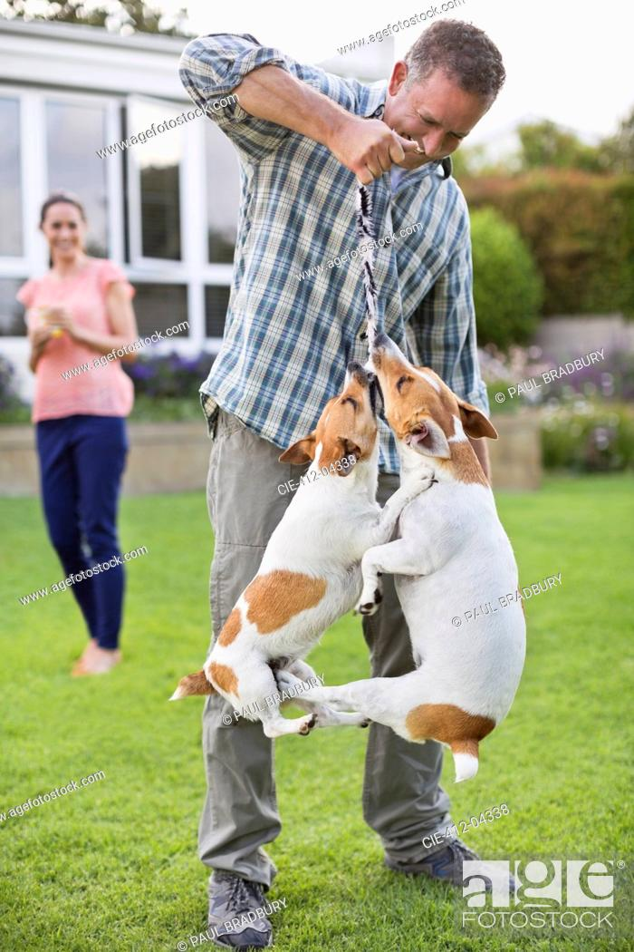 Stock Photo: Man playing with dogs in backyard.