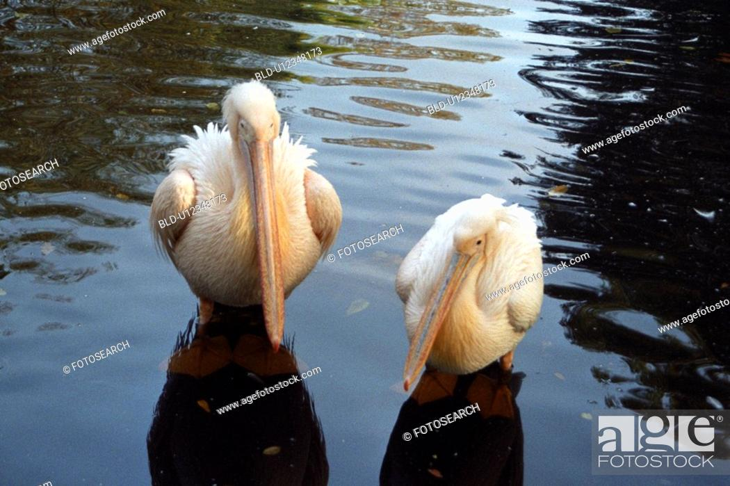 Stock Photo: hagenbecks, beaks, germany, feet, couple, Hamburg, arno.