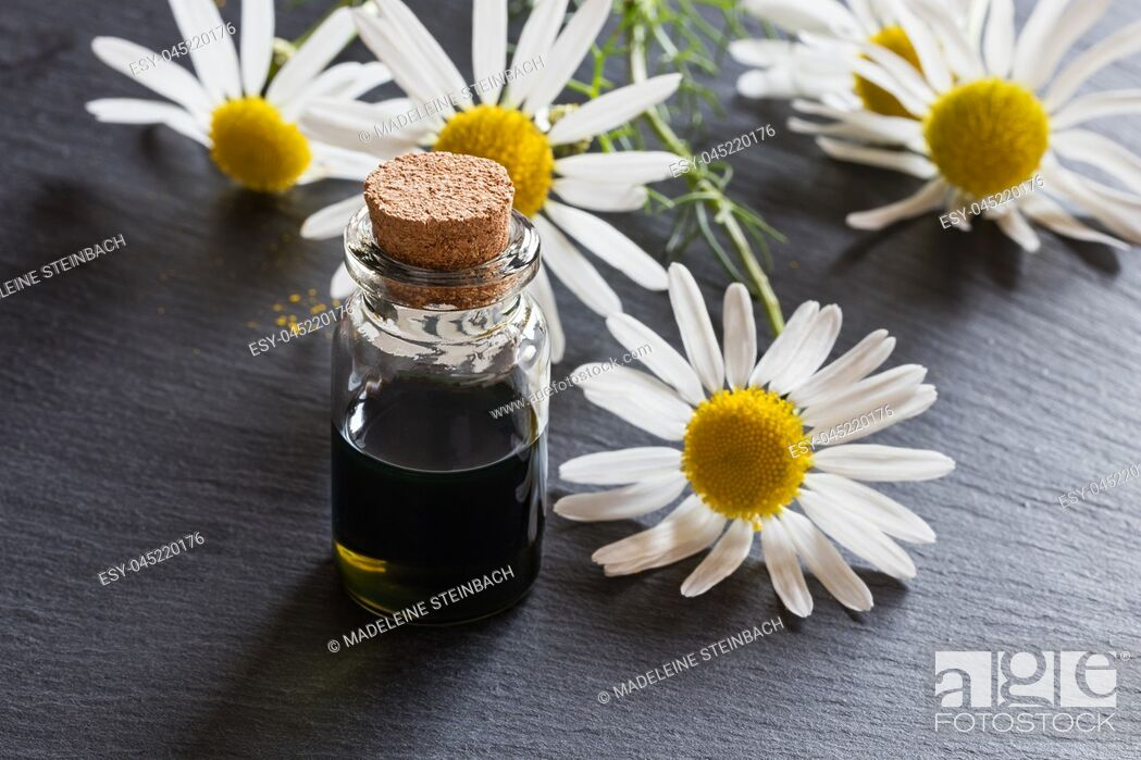 Stock Photo: A bottle of dark blue chamomile essential oil with fresh chamomile flowers in the background.