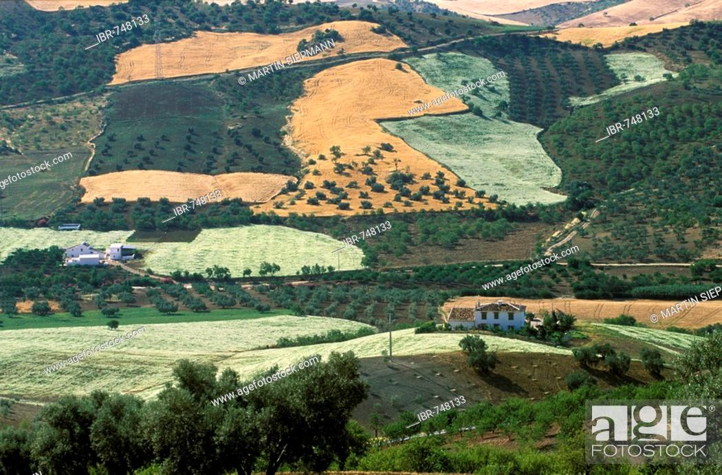 Stock Photo Cultivated Landscape Valle De Abdalajis Mlaga Province Andalusia Spain