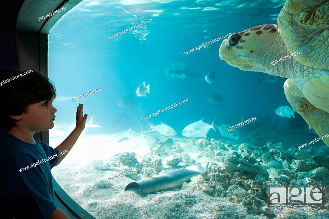 Stock Photo: Boy watching sea turtle in aquarium.
