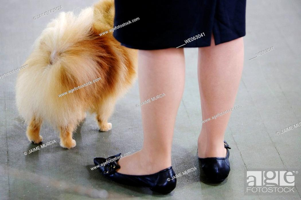 Stock Photo: Older lady with small dog.