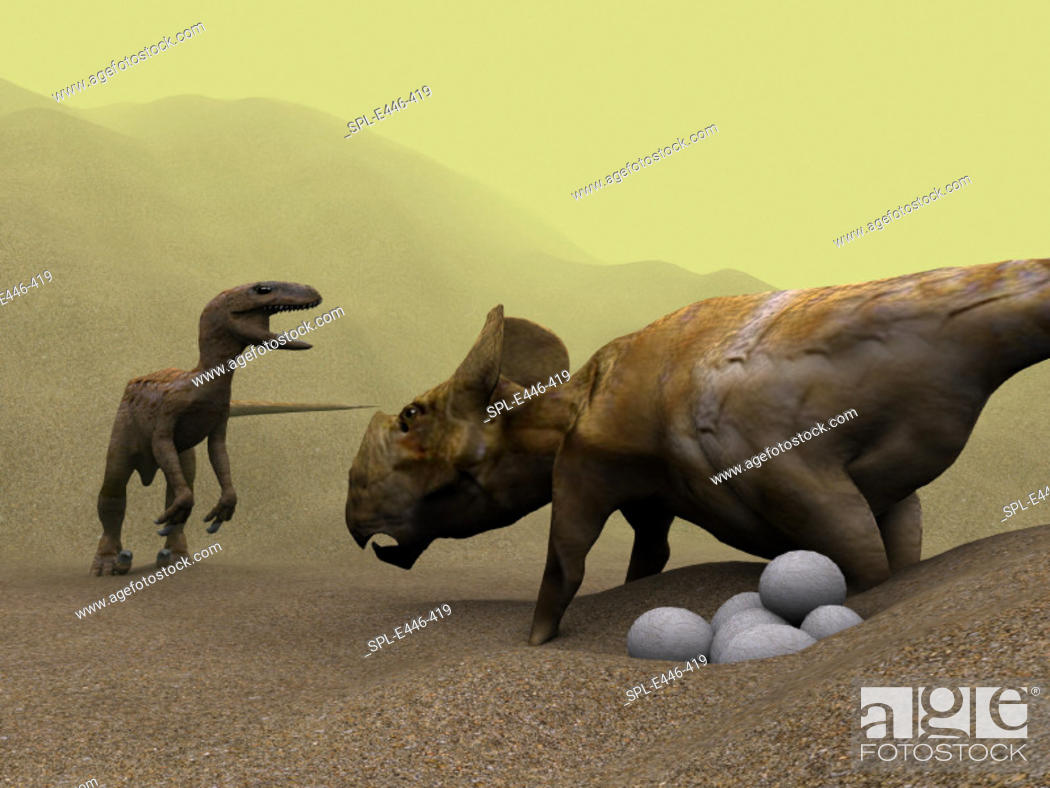 Stock Photo: Protoceratops dinosaur (right) defending its nest against a raptor dinosaur, computer artwork. A clutch of eggs is at lower right.