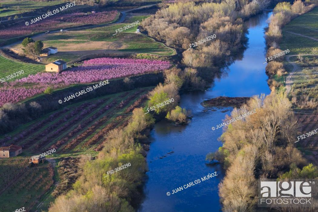 Stock Photo: Flowering, Peach tree (Prunus persica), Willow tree (Salix sp. ), Fruiturisme, Tourism Experience, Aitona village, Segre river, Baix Segre, Lleida, Catalonia.