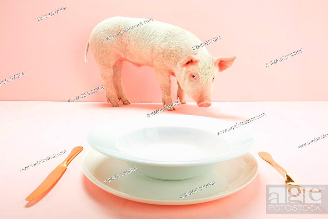 Stock Photo: Piglet near empty plate in pink studio.