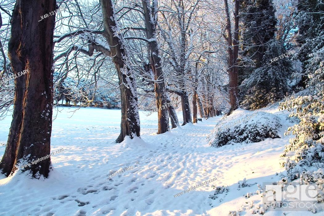 Stock Photo: Winter in St  Anne's Park, Dublin, Ireland.