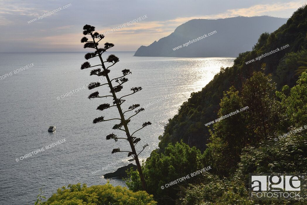 Stock Photo: Italy, Liguria, Cinque Terre National Park, World Heritage Site, Vernazza surroundings.