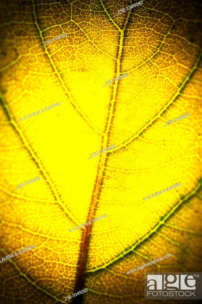 Photo de stock: Close up of a yellow autumn leaf.