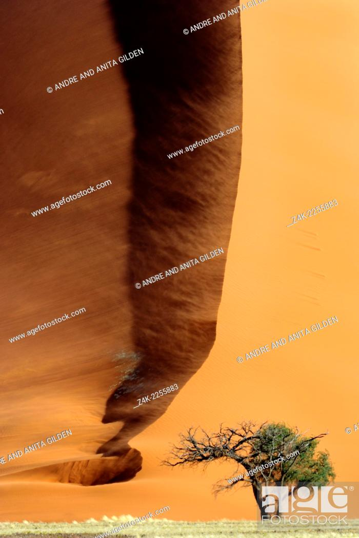 Imagen: Camel Thorn (Acacia erioloba) growing at the foot of a Red Sossusvlei Dune.
