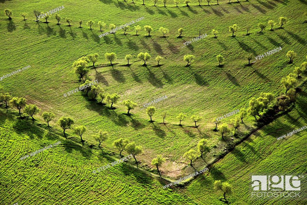 Stock Photo: almond trees planted in curves  Los Velez, Anadalucia.