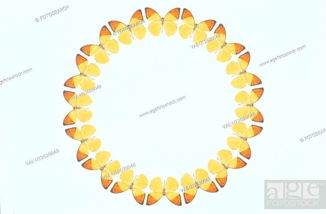 Stock Photo: The Round Frame Of A Butterfly.