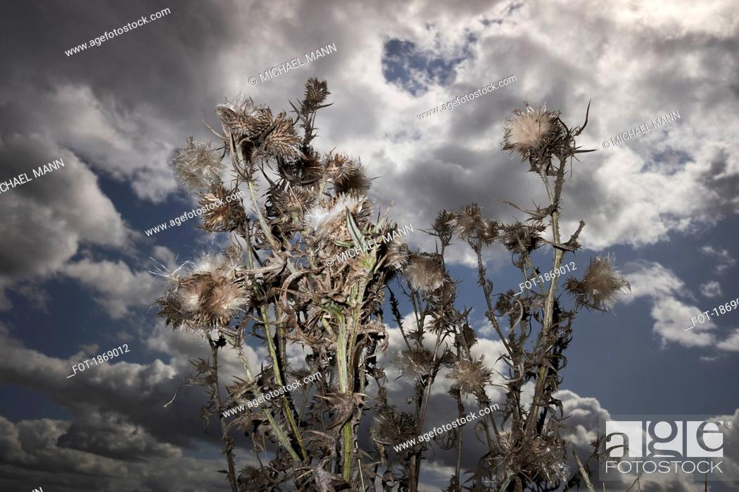 Stock Photo: Thorny branches against cloudy sky.