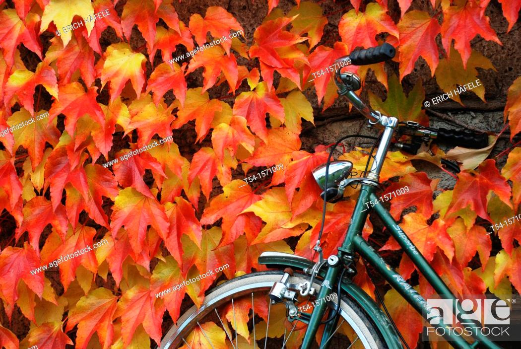 Stock Photo: A bicycle is on a wall with colorful foliage.