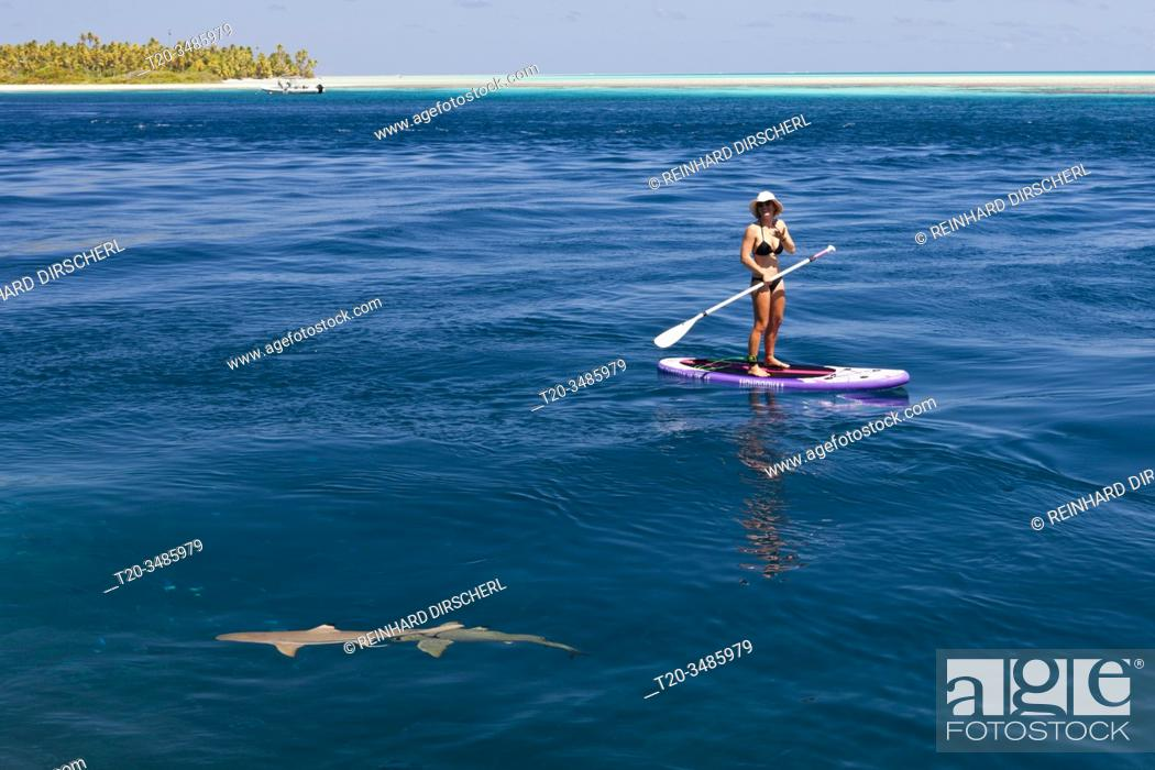 Stock Photo: Reef Shark in Lagoon of Tetamanu Village, Fakarava, Tuamotu Archipel, French Polynesia.